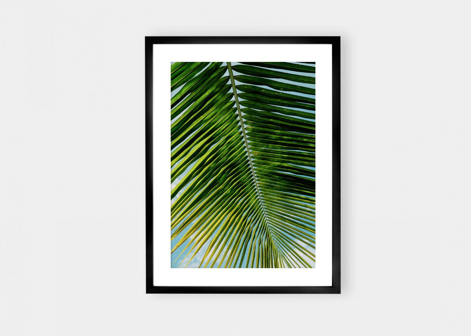 Calm Palm | Salg av Fine Art fotokunst på nett | Fotograf Stian Gregersen